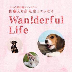 ペット心理行動カウンセラー佐藤えり奈先生のエッセイ -Wanderful Life-
